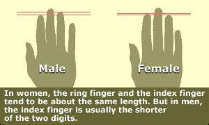 compare testosterone and estrogen picture 2