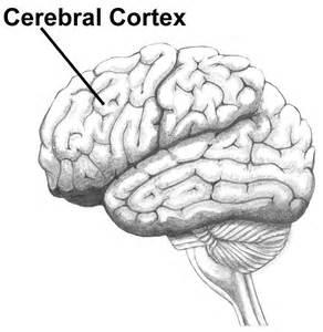 cerbvas disease picture 9