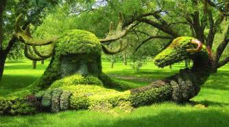 garden picture 1