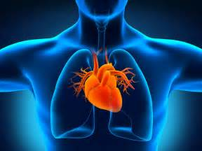 cardiovascular picture 3