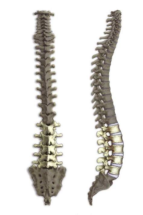 elliptical trainer hip joint pain picture 17