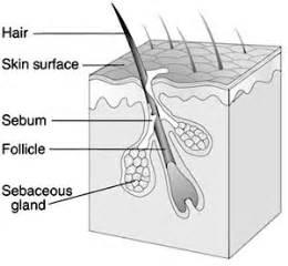 drug testng hair folicles picture 6