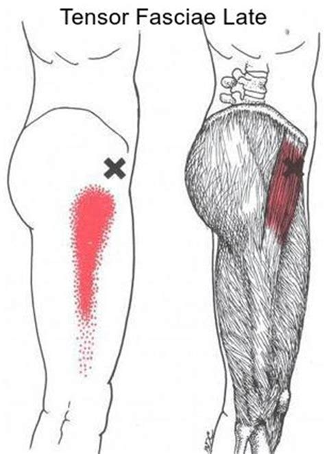 cure for muscle fasciae picture 19