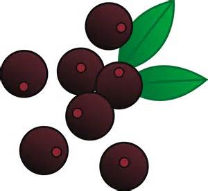 use of acai berry for dogs picture 13