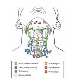 enlarged thyroid and lymph gland picture 1