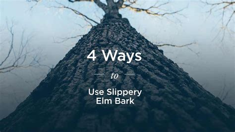 healing benefits of slippery elm bark for vaginal issues picture 12
