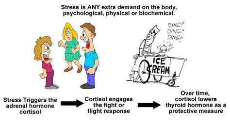 hypothyroidism and cortisol picture 10