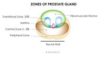 Where is the prostate picture 18