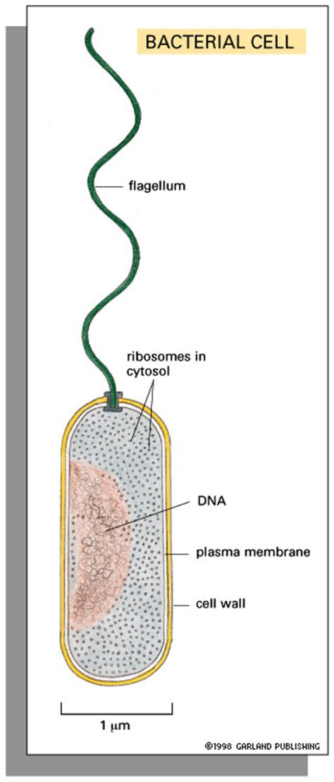 bacterial meningjitis picture 9