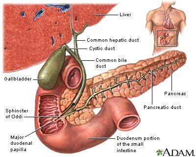 estrogen and gallbladder removal picture 9