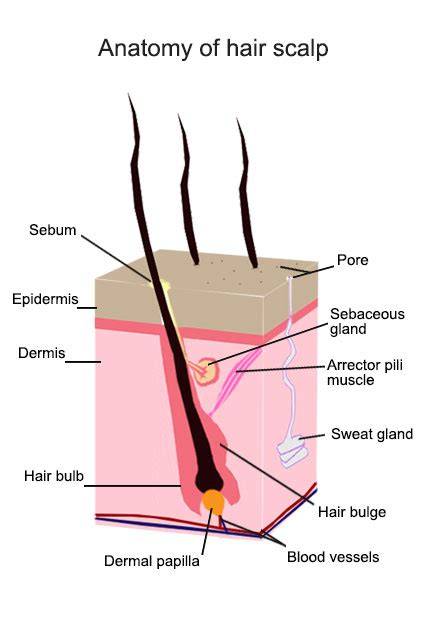 neutralizing metals on the hair and scalp picture 4