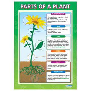 Online glossary of herbal plants and their uses picture 7