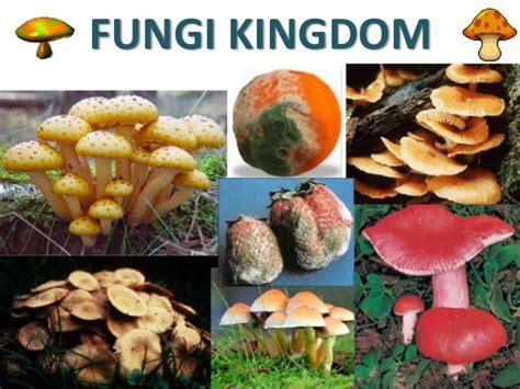 fungi kingdom picture 15