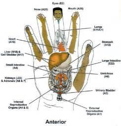 reflexology overactive bladder picture 21