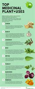 llist of natural herbs that enhance the penius picture 22