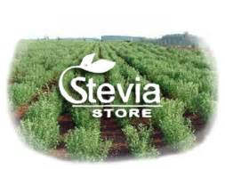 where to buy stevia plants in the philippines picture 7