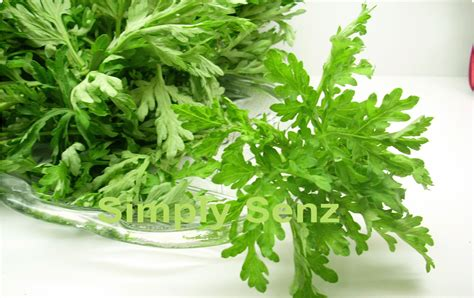 herbs that stop menstruation picture 1