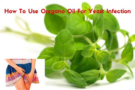 how to use organo oil how to cure picture 4