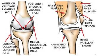 diagram of a knee joint picture 6