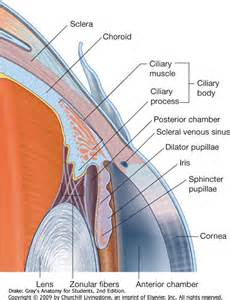 sphincter muscle picture 7
