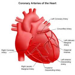 artery blood flow picture 10