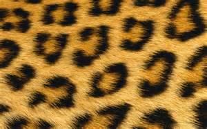 lleopard skin picture 2