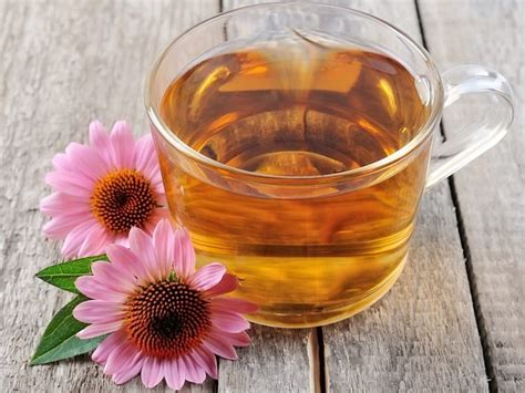 can pregnant women take echinacea picture 9