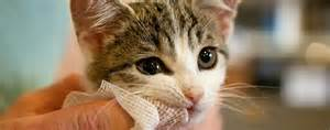 feline teeth cleaning picture 9