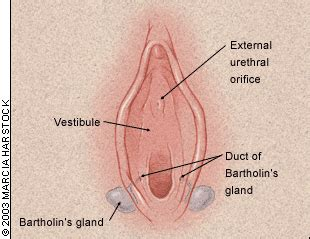 castrol oil to help bartholin cyst picture 14