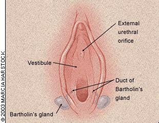 castor oil bartholins gland pain picture 2