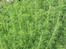 gamot para di malagas ang buhok picture 7