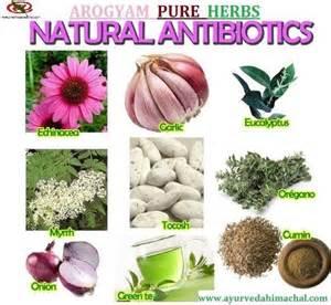herbal antibotics picture 10