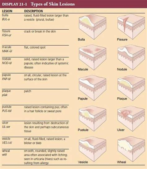 medical dictionary skin disorders picture 3