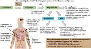Head injury and blood pressure aldosterone release picture 5
