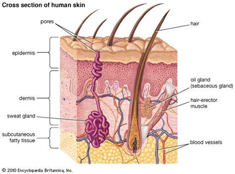 fatty tissue under the skin picture 7