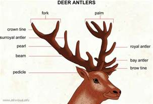 antler pipe picture 5