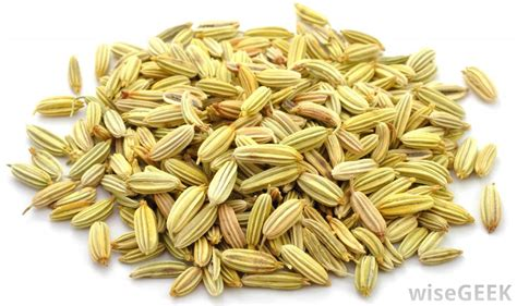 what is fennel picture 7