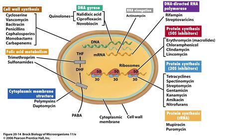 types of probiotics picture 13