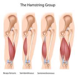 hamstring muscle injuries picture 2
