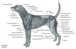 dehydrated and muscle problems in dogs picture 19