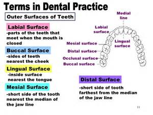 cuspid teeth picture 6