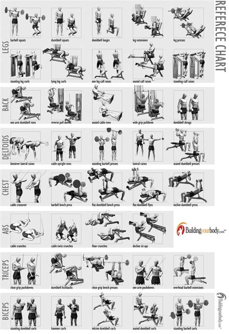 full body muscle building workouts picture 9