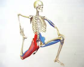 iliopsoas muscle picture 11
