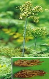is hoodia good for cholesterol picture 10