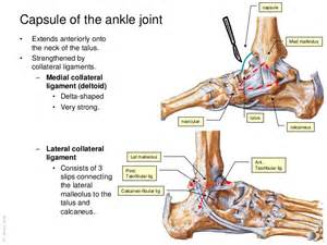 ankle joint picture 17