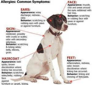 canine health symtoms picture 2