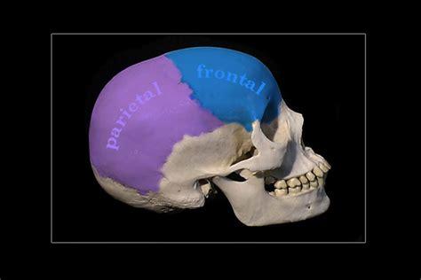 cranium pills picture 6