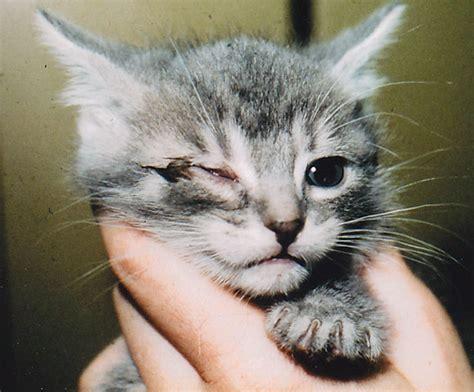 feline skin disorders picture 11