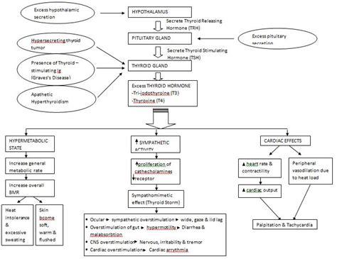 pathophysiology of graves disease diagram picture 2