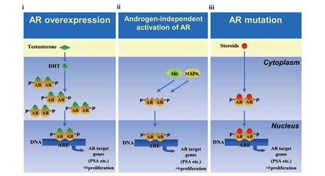 androgen receptor blockers herbs picture 15